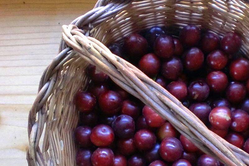 Le conserve di giugno: Nocino e Marmellata di rusticani